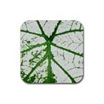 Leaf Patterns Drink Coasters 4 Pack (Square) Front