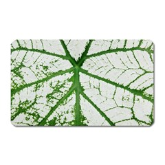 Leaf Patterns Magnet (rectangular) by natureinmalaysia