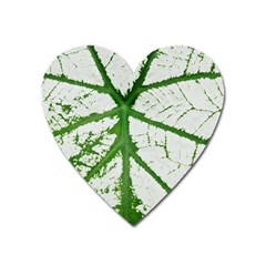 Leaf Patterns Magnet (Heart)