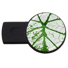 Leaf Patterns 2gb Usb Flash Drive (round) by natureinmalaysia