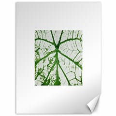 Leaf Patterns Canvas 36  X 48  (unframed) by natureinmalaysia