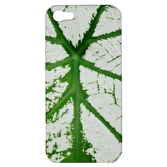 Leaf Patterns Apple Iphone 5 Hardshell Case by natureinmalaysia