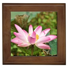 A Pink Lotus Framed Ceramic Tile by natureinmalaysia