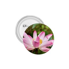 A Pink Lotus 1 75  Button by natureinmalaysia