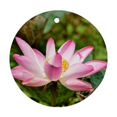 A Pink Lotus Round Ornament by natureinmalaysia