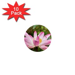 A Pink Lotus 1  Mini Button Magnet (10 Pack) by natureinmalaysia