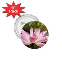 A Pink Lotus 1 75  Button (10 Pack) by natureinmalaysia