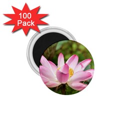 A Pink Lotus 1 75  Button Magnet (100 Pack) by natureinmalaysia