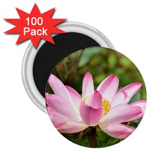 A Pink Lotus 2 25  Button Magnet (100 Pack) by natureinmalaysia
