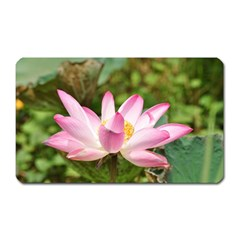 A Pink Lotus Magnet (rectangular) by natureinmalaysia
