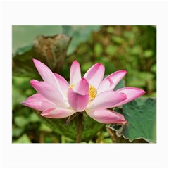 A Pink Lotus Glasses Cloth (small) by natureinmalaysia