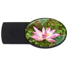 A Pink Lotus 4gb Usb Flash Drive (oval) by natureinmalaysia