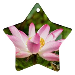 A Pink Lotus Star Ornament (two Sides) by natureinmalaysia