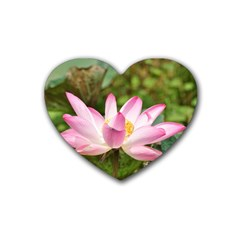 A Pink Lotus Drink Coasters 4 Pack (heart)  by natureinmalaysia