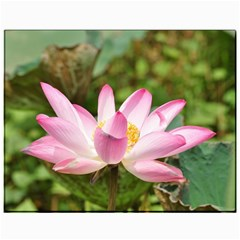 A Pink Lotus Canvas 11  X 14  9 (unframed) by natureinmalaysia
