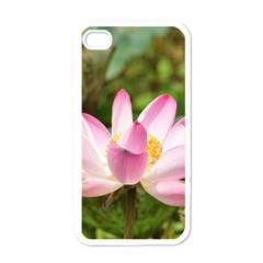 A Pink Lotus Apple Iphone 4 Case (white) by natureinmalaysia