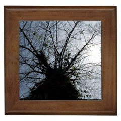 An Old Tree Framed Ceramic Tile by natureinmalaysia