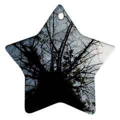An Old Tree Star Ornament by natureinmalaysia