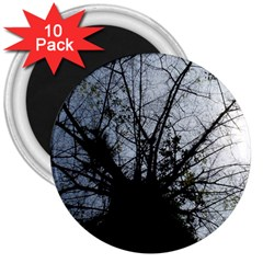 An Old Tree 3  Button Magnet (10 Pack) by natureinmalaysia