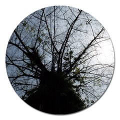 An Old Tree Magnet 5  (round) by natureinmalaysia