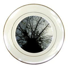 An Old Tree Porcelain Display Plate by natureinmalaysia