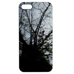 An Old Tree Apple Iphone 5 Hardshell Case With Stand by natureinmalaysia