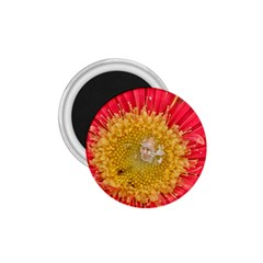 A Red Flower 1 75  Button Magnet by natureinmalaysia