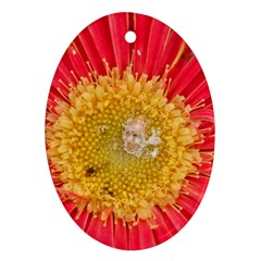 A Red Flower Oval Ornament by natureinmalaysia
