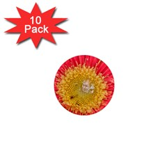 A Red Flower 1  Mini Button Magnet (10 Pack)