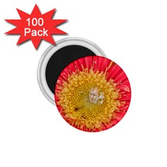 A Red Flower 1 75  Button Magnet (100 Pack)