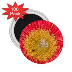 A Red Flower 2 25  Button Magnet (100 Pack) by natureinmalaysia