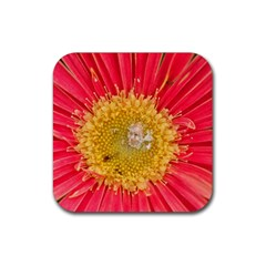 A Red Flower Drink Coaster (square) by natureinmalaysia