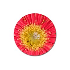 A Red Flower Magnet 3  (round) by natureinmalaysia