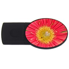 A Red Flower 2gb Usb Flash Drive (oval) by natureinmalaysia
