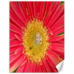 A Red Flower Canvas 12  X 16  (unframed) by natureinmalaysia