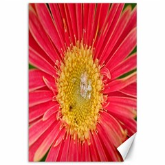 A Red Flower Canvas 12  X 18  (unframed) by natureinmalaysia