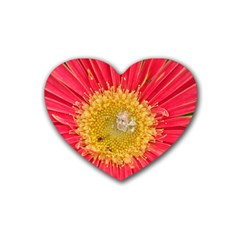A Red Flower Drink Coasters (heart) by natureinmalaysia