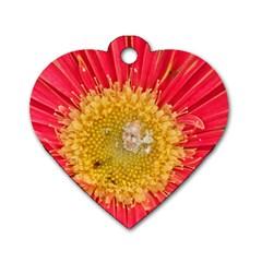 A Red Flower Dog Tag Heart (two Sided) by natureinmalaysia