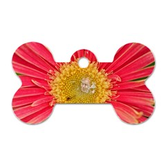 A Red Flower Dog Tag Bone (one Sided) by natureinmalaysia