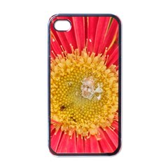 A Red Flower Apple Iphone 4 Case (black) by natureinmalaysia