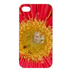 A Red Flower Apple Iphone 4/4s Premium Hardshell Case by natureinmalaysia