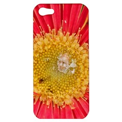 A Red Flower Apple Iphone 5 Hardshell Case by natureinmalaysia