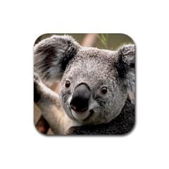 Koala Drink Coasters 4 Pack (Square) by vipahi