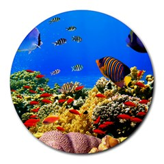 Fish 8  Mouse Pad (round) by Contest1624092