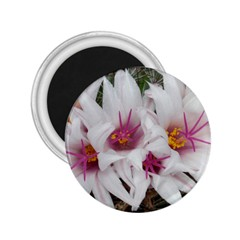 Bloom Cactus  2 25  Button Magnet