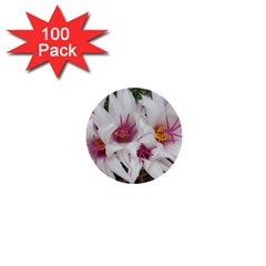 Bloom Cactus  1  Mini Button (100 Pack) by ADIStyle