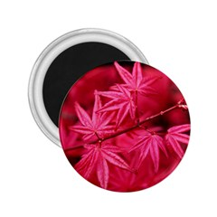 Red Autumn 2 25  Button Magnet by ADIStyle