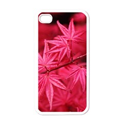 Red Autumn Apple Iphone 4 Case (white) by ADIStyle