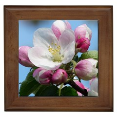 Apple Blossom  Framed Ceramic Tile by ADIStyle