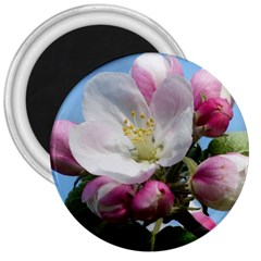 Apple Blossom  3  Button Magnet